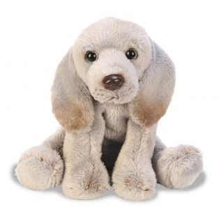 SUKI Weimaraner Pet Dog