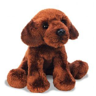 SUKI Chocolate Labrador Pet Dog