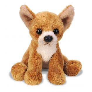 SUKI Chihuahua Pet Dog