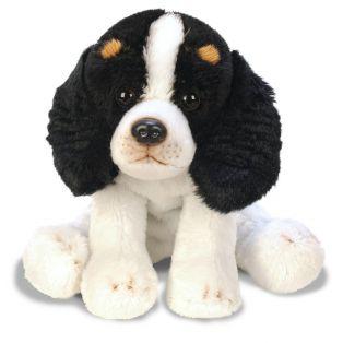 SUKI King Charles Spaniel Pet Dog